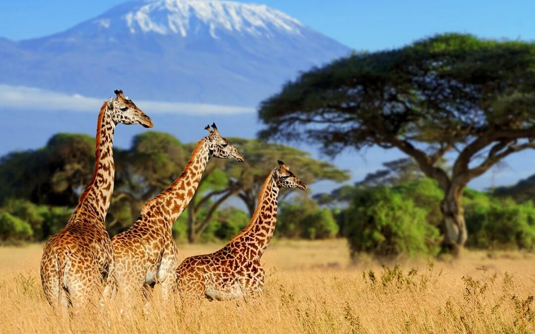 Latest trip to Kenya